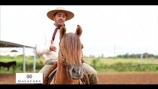 Meu cavalo fica levantando a cabeça o tempo todo, como corrigir?