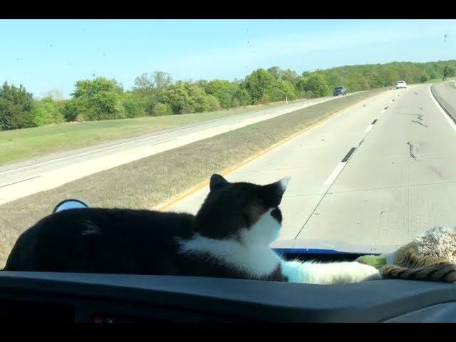 peanut-the-trucker-cat