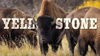 Yellowstone National Park in 8K 60P (FUHD)