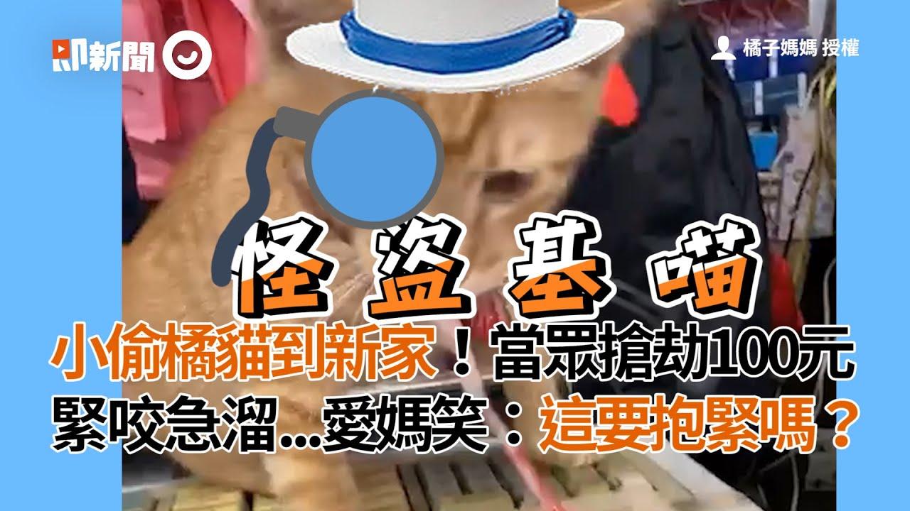 小偷橘貓當眾搶劫100元!緊咬急溜...愛媽笑:這要抱緊嗎?|寵物|私房錢 - YouTube