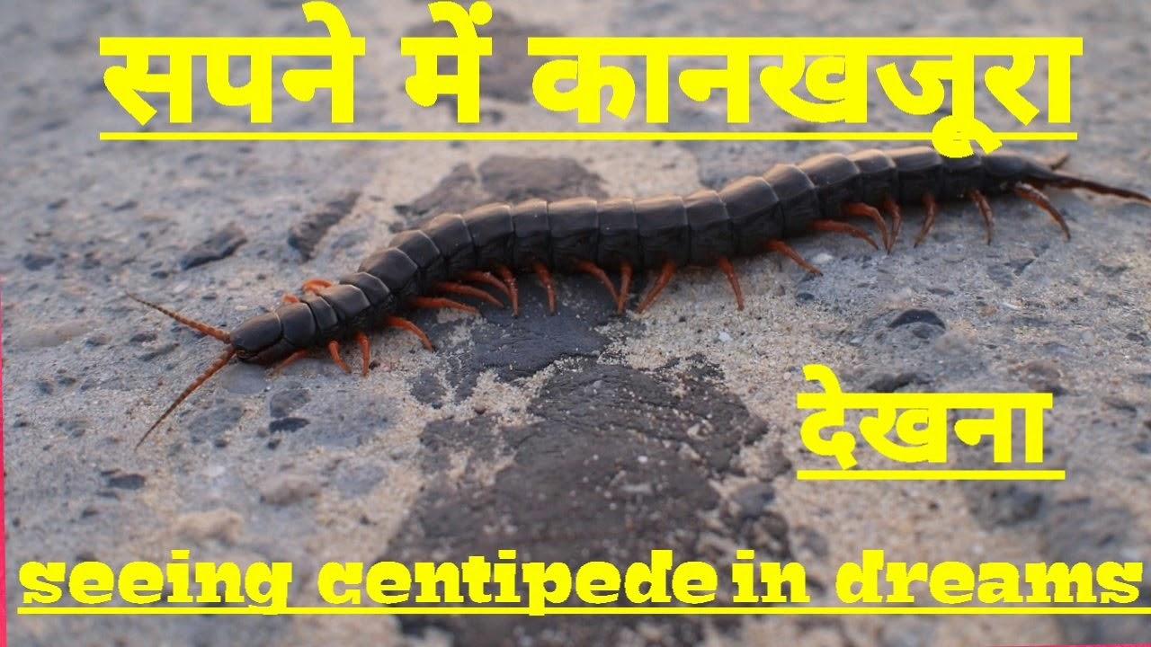 सपने में कानखजूरा देखना  Seeing centipede in dreams