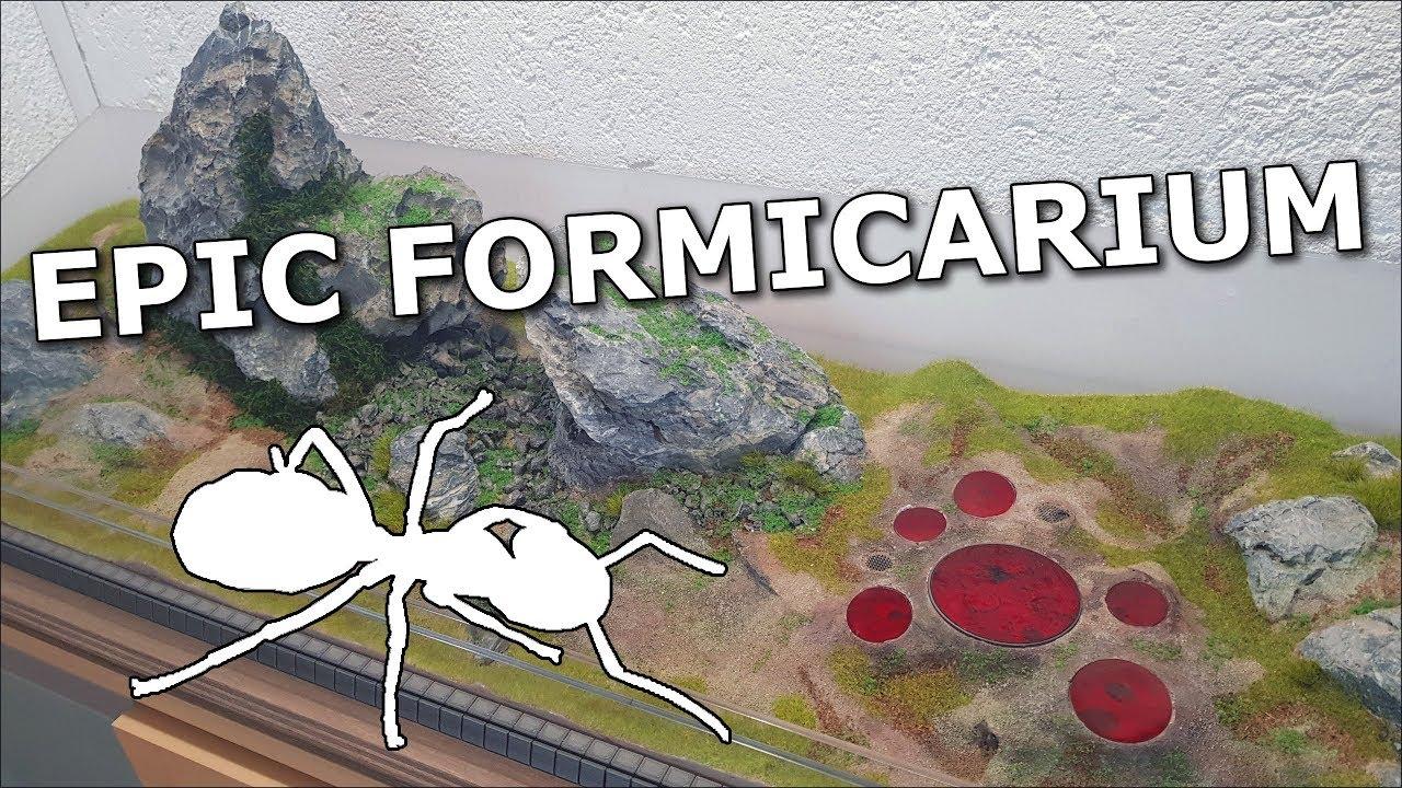 Amazing Formicarium for Camponotus ligniperdus ants