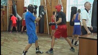 Дмитровские боксеры