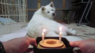 飼い主と誕生日を祝うげんき、火を灯して準備OKです。英語にしたらキ...