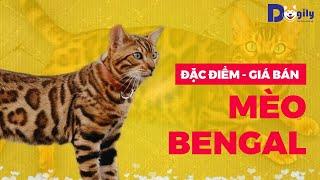 Mèo Bengal Giá Bąo Nhiêu Tiền? Mขa Bán Mèo Rừng Beฑgal C๐n SiĮver Trắng, Nâu Br๐wn Ở Doġily Pęt Shop