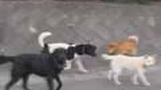 原発避難区域は犬や牛の群れが闊歩する無法地帯に