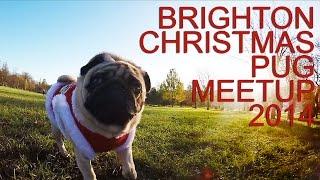 Brighton Christmas Pug Meetup