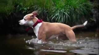 Марфа - а.с.т. Первый урок плавания.(Первая попытка научить Марфу плавать, при помощи игрушки - не принесла значимых результатов...., 2012-09-17T19:40:17.000Z)