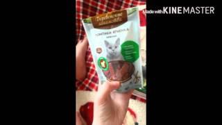 🌻Питание кошки🌻Как приучить котенка к лотку🌻