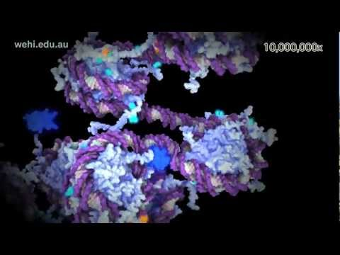 X Inactivation and Epigenetics