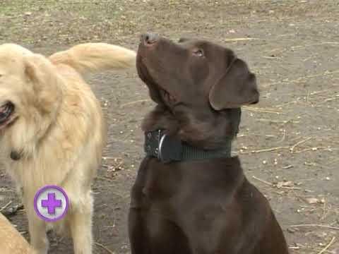 parasitos en perros giardias