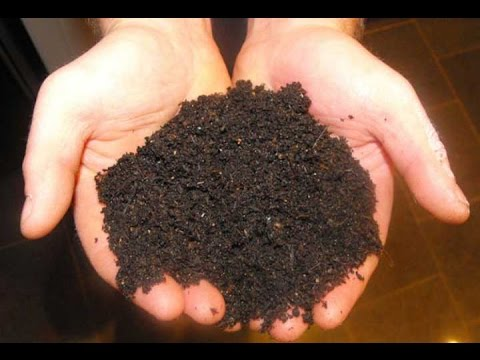 Two in one making compost & compost tea  ||| How to convert Gober as a fertilizer