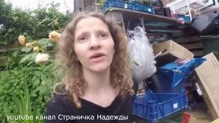 Квочка - подготовка к цыплятам