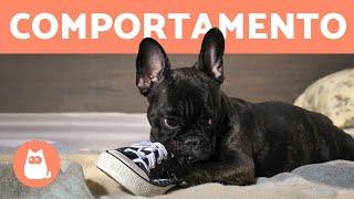 10 problemas de COMPORTAMENTO CANINO