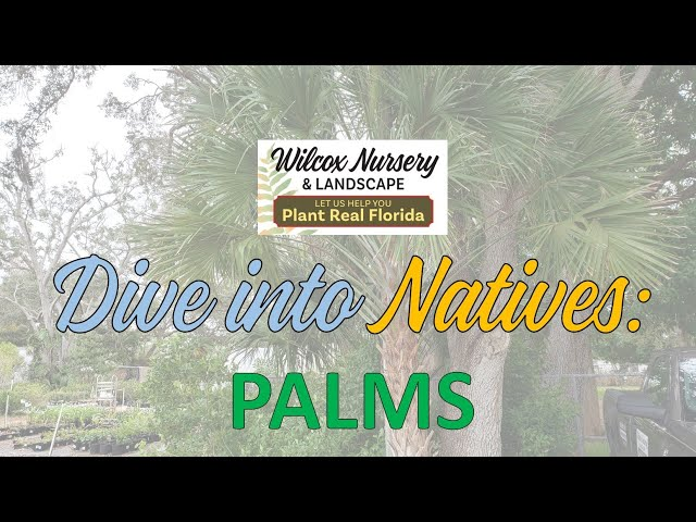 Dive into Natives: Palms