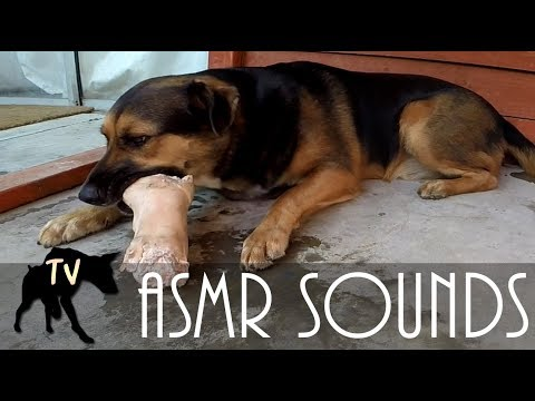 ASMR Dog eating Pigs Foot Full Hour | Raw Feeding Vlog