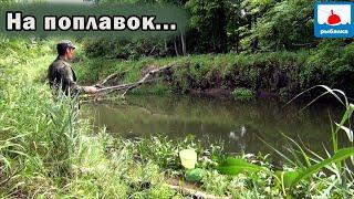 Рыбалка на поплавок в проводку на красивой речке! (Не на карася)