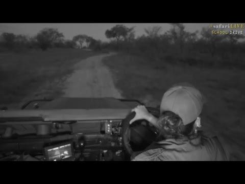 safariLIVE - Sunset Safari - Nov. 9, 2017
