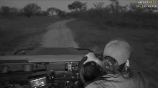 safarilive sunset safari nov 9 2017