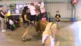 Tammy The Tamworth Pig At Pet Expo 2010 - Arabanoo Working Kelpie Stud.wmv