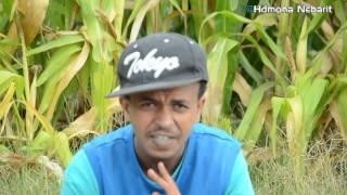 Eritrean Comedy: ባህሊ ሓያል ብ ኣማን ናሽሕ (ወዲ ናሽሕ)  Bahli Hayal By Aman wedinash - 2016