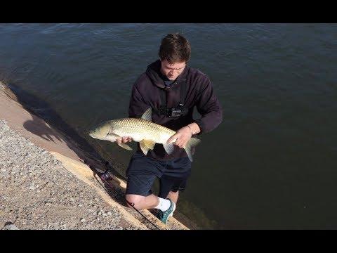 Fishing Arizona Canal Carp