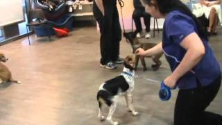 Equipet- Dog Training Ireland Puppy Party