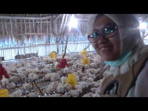 dokumentasi pkl 2016 Prodi kesehatan Ternak Universitas Airlangga