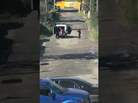 На улице Ленина пристрелили собаку на глазах у прохожих