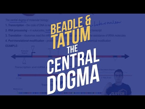 Beadle and Tatum and The Central Dogma