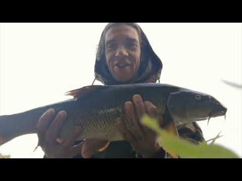 Fishing For Barbel And Chub On The River Ribble Part. 1