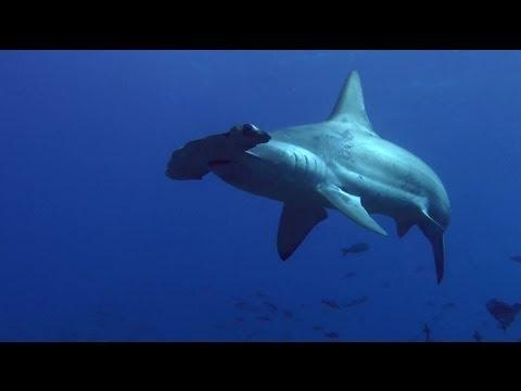 Galapagos Diving 2011 Version 2