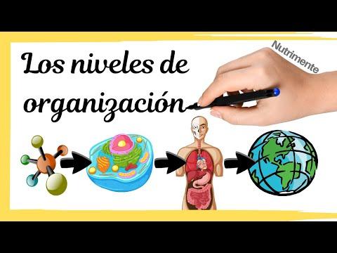 Download Niveles de organización de la materia y los seres vivos