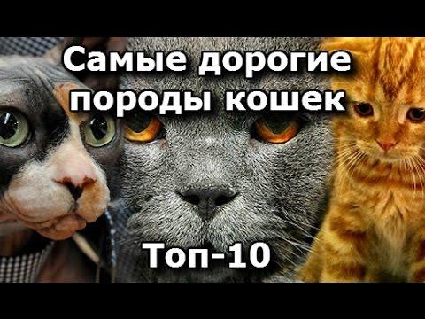 ТОП 10, Самые Дорогие породы Кошек