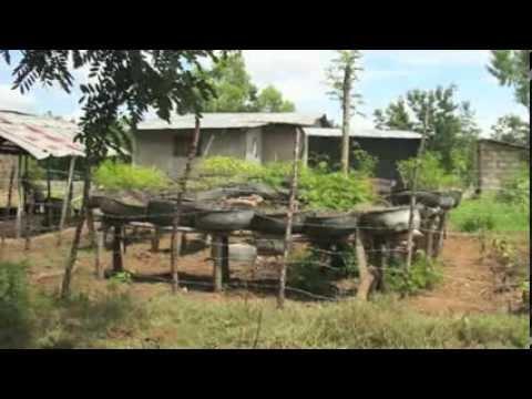 Haiti's Grassroots Healthcare System