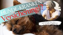 Braucht man eine Hundekrankenversicherung oder ist das Quatsch?