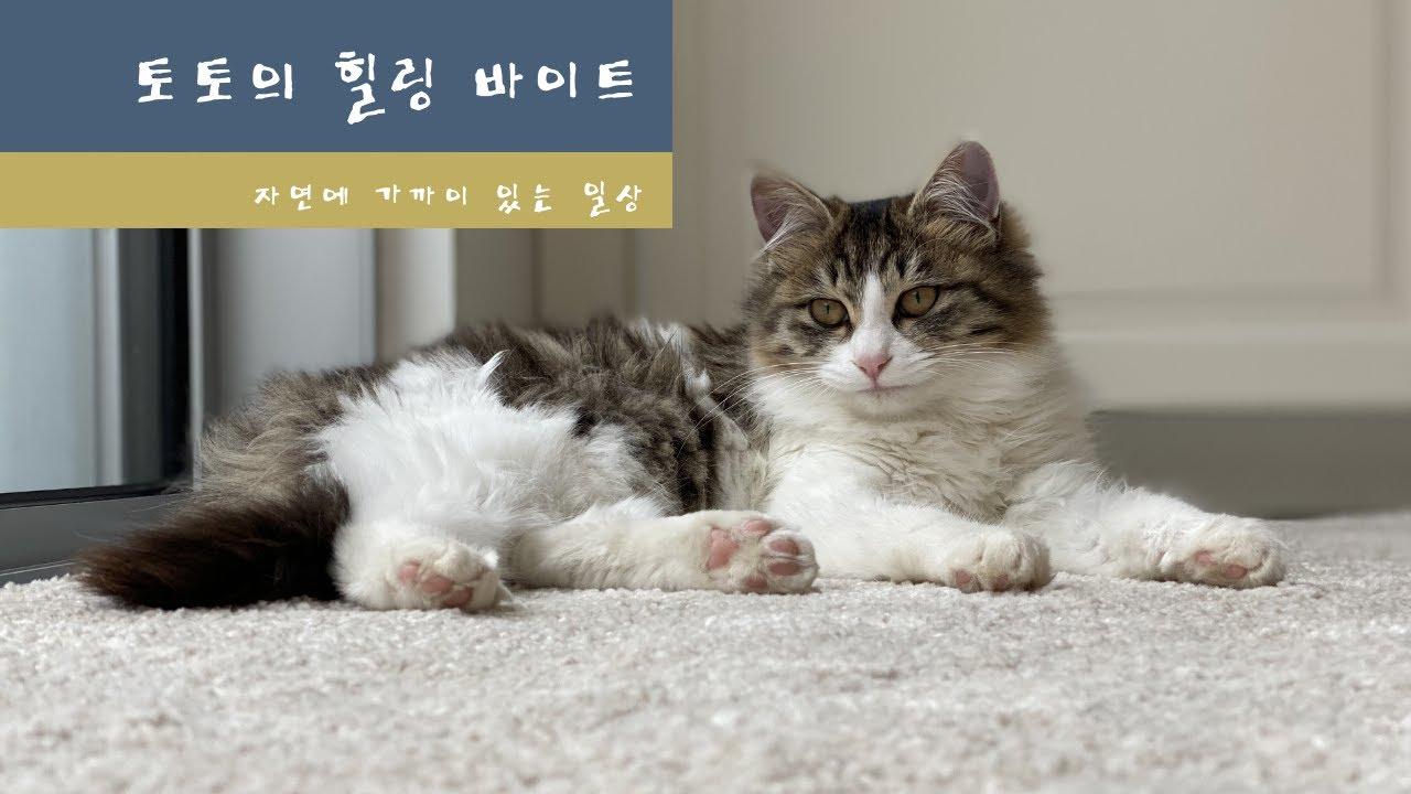 힐링 크리스피 ASMR( feat. 토토)