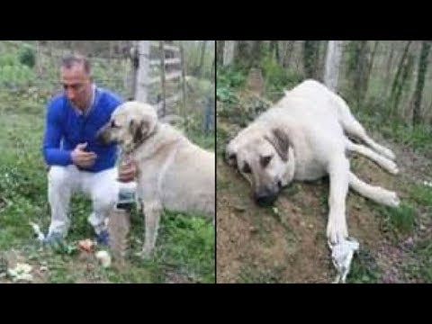 He's Confused When Dog Escapes Every Day. When He Sees Where She Goes, Breaks Down In Tears