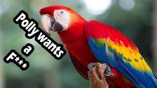 Birds Swearing