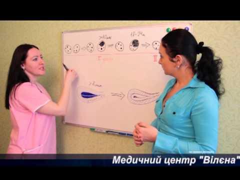 Фолликулометрия - ультразвуковой мониторинг развития фолликулов и эндометрия
