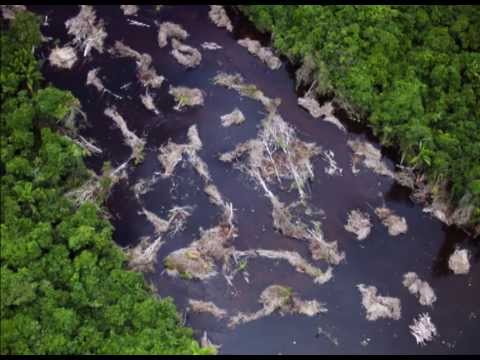 Brazil's Dammed Rainforest