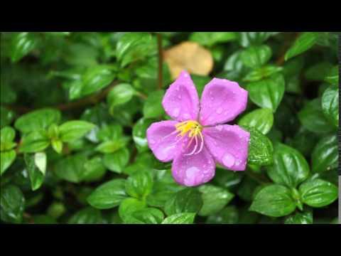 ครูแสง : เรียนลัดถ่ายภาพ 12 ดอกไม้ไทย (Thai Flowers Movie 6)