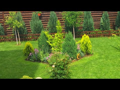 Beautiful Small Garden before Flowering - Small tree decoration 2019