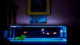 The Obligatory Fish Room Tour