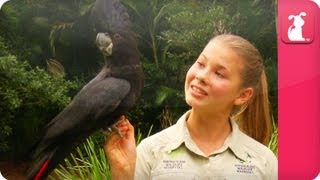 Bindi & Robert Irwin feature - Black Cockatoo (Euli) - Growing Up Wild