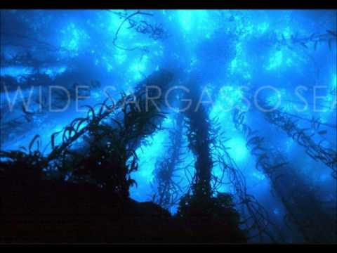 Wide Sargasso Sea - Trailer (2014)