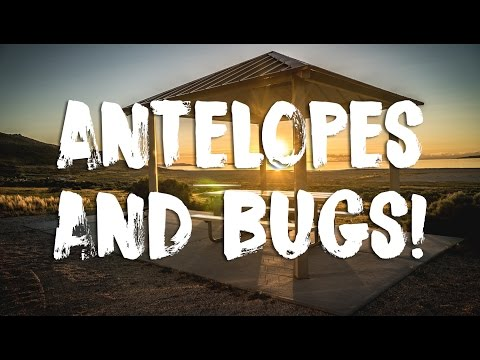 Moving to Antelope Island State Park & BUGS