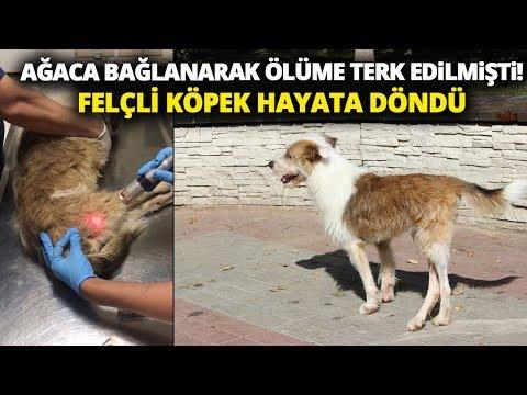 Ölüme Terk Edilen Felçli Köpek Uzatılan Yardım Eliyle Hayat Döndü
