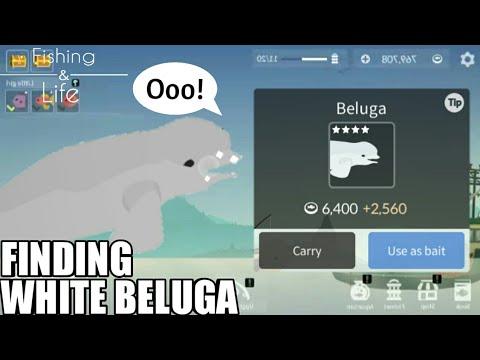 fishing-life-#11-catching-beluga