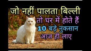 यह वीडियो देखने के बाद हर कोई बिल्ली पालने लगेगा बिल्ली पालने के 10 फायदे cat care tips